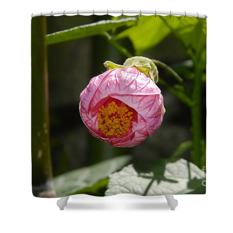 Flower Shower Curtain featuring the photograph Coming Out by David Lee Thompson