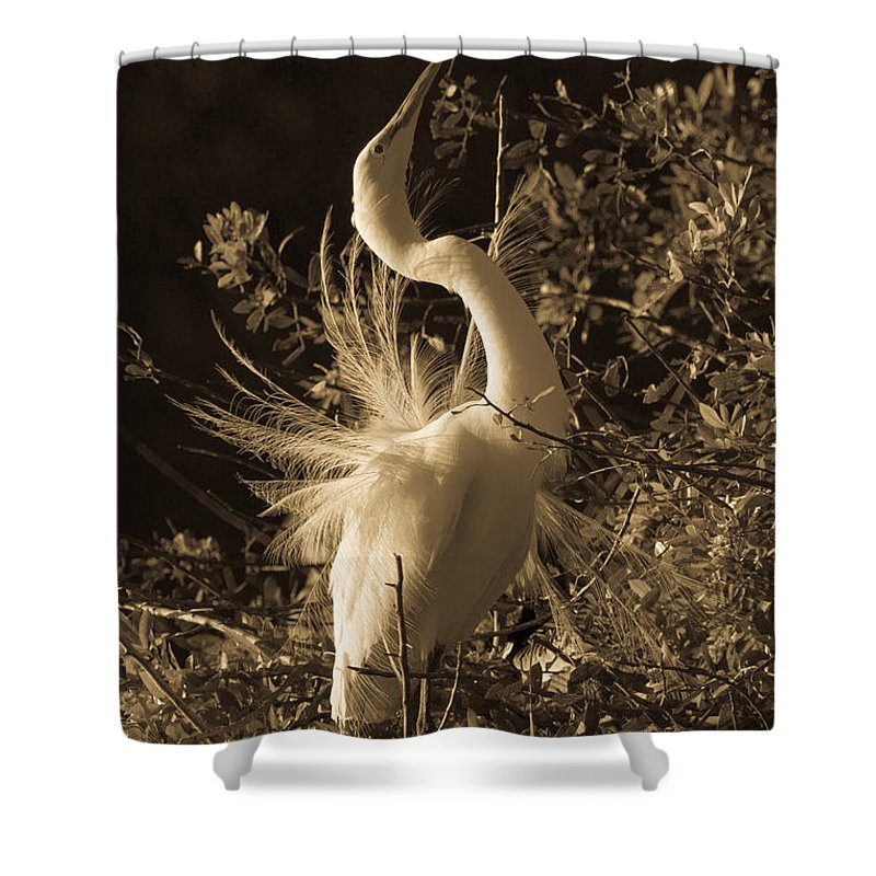 Cream Tone Shower Curtain featuring the photograph Common Egret In Cream Tone by Deb Henman