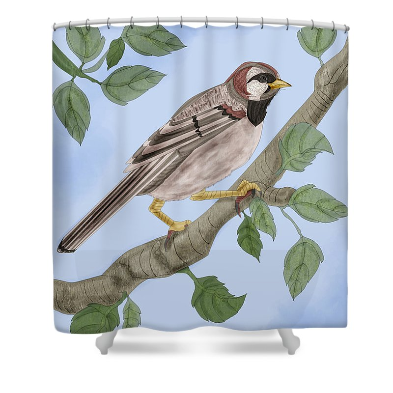 Sparrow Shower Curtain featuring the painting Common House Sparrow by Anne Norskog