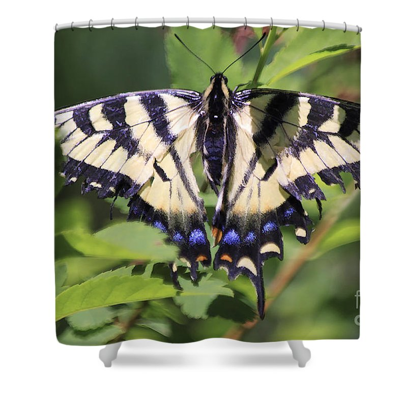 Butterfly Shower Curtain featuring the photograph Common Yellow Swallowtail by Deborah Benoit