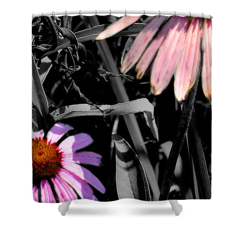 Purple Cone Flower Shower Curtain featuring the photograph Cone Flower Tapestry by Steve Karol