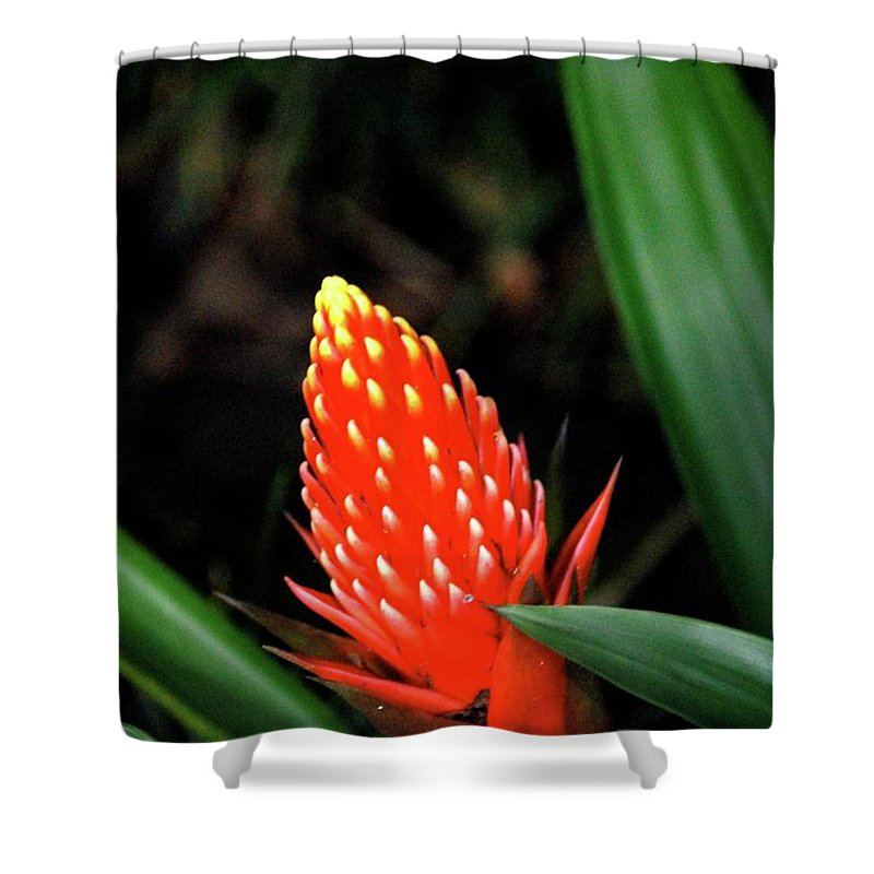 Red Flower Shower Curtain featuring the photograph Cone Of Color by Debbie Karnes