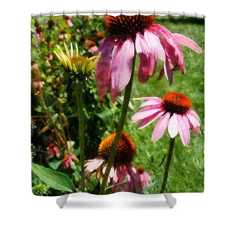 Coneflower Shower Curtain featuring the photograph Coneflowers In Garden by Susan Savad