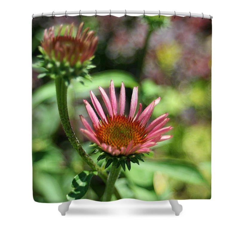 Photography Shower Curtain featuring the photograph Cones Are Coming by Barbara S Nickerson