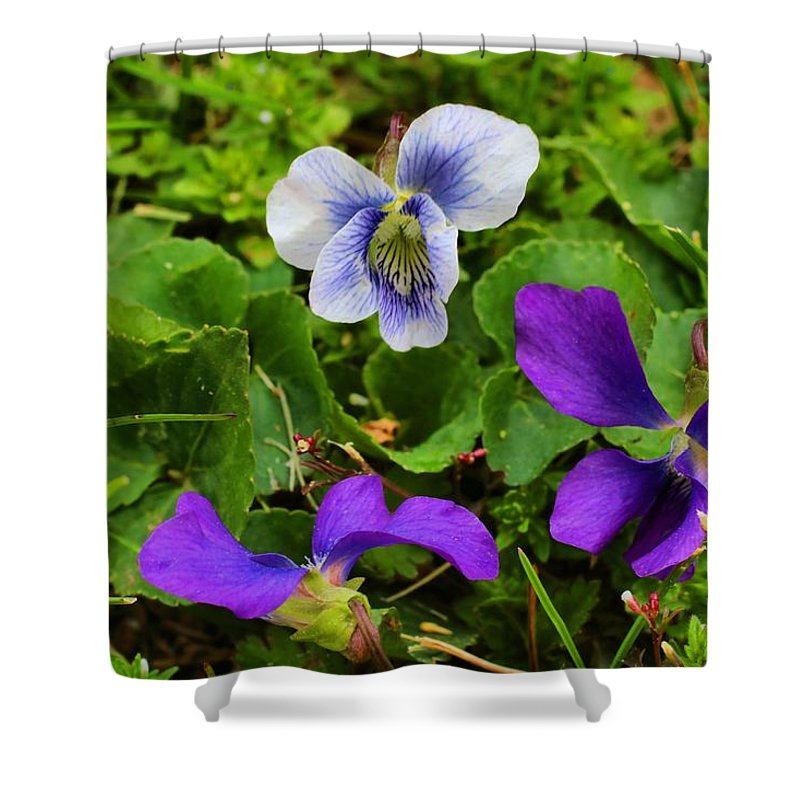 Violets Shower Curtain featuring the photograph Confederate And Purple-blue Violets by Kathryn Meyer