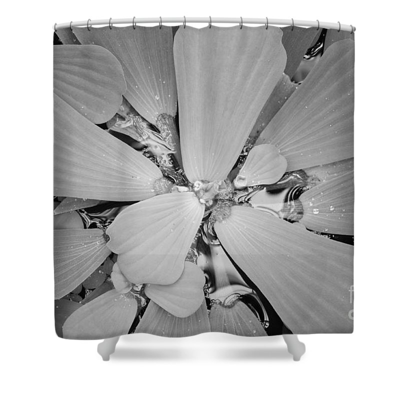 Nature Shower Curtain featuring the photograph Conservatory Nature In Black And White 1 by Carol Groenen