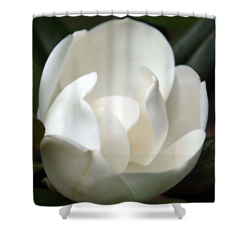 Magnolia Shower Curtain featuring the photograph Container by Amanda Barcon