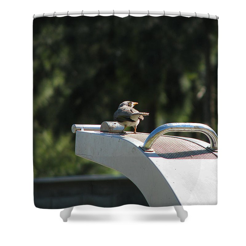Bird Shower Curtain featuring the photograph Cool Drink On A Hot Day by Rodney Appleby