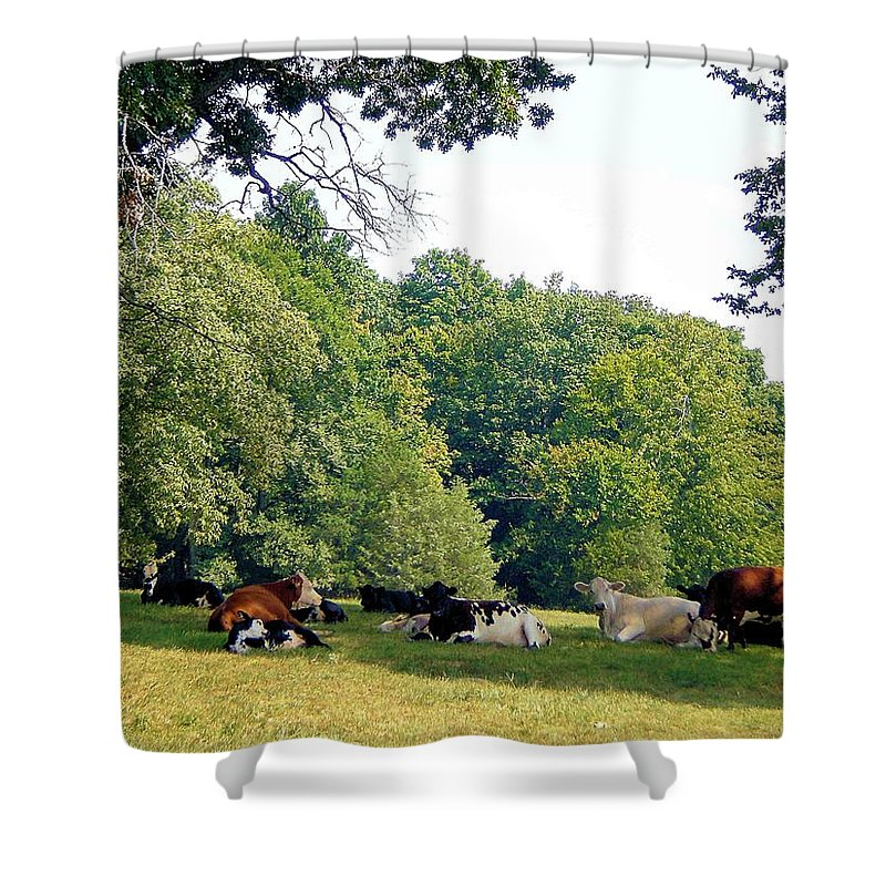 Landscapes Shower Curtain featuring the photograph Cool Gathering by Jan Amiss Photography