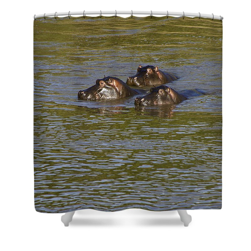 Africa Shower Curtain featuring the photograph Cooling Off by Michele Burgess