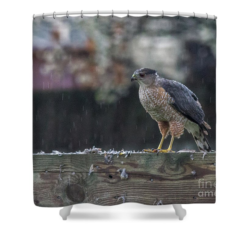 Hawk Shower Curtain featuring the photograph Cooper's Hawk In The Rain by Jonathan Ryan