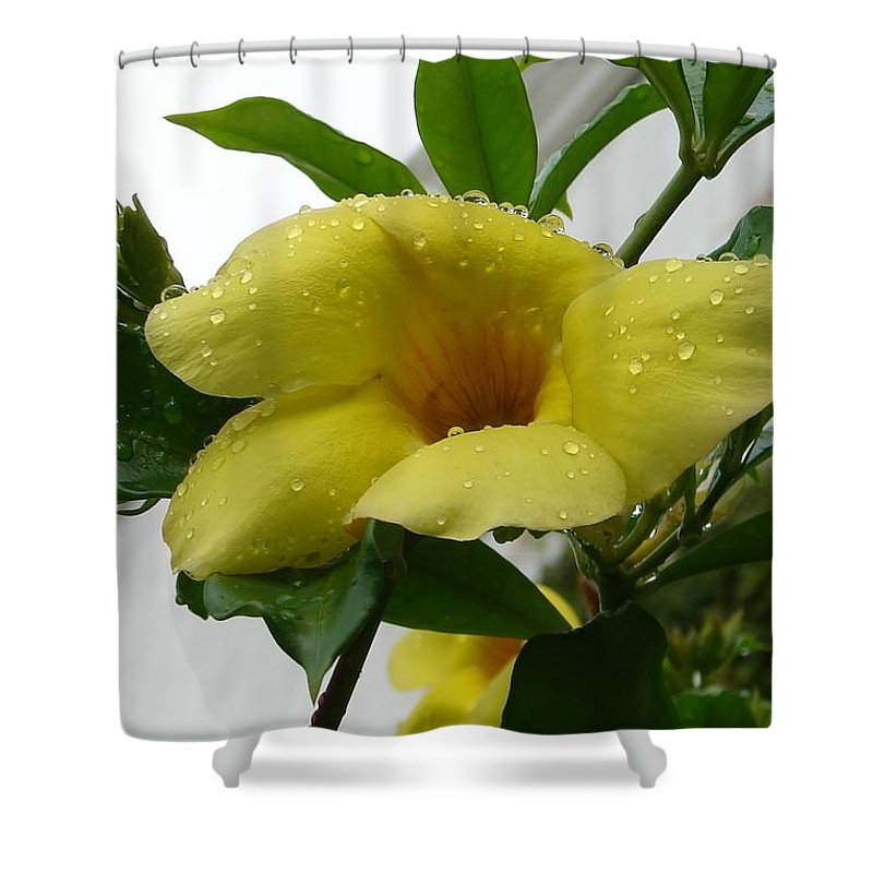 Yellow Water Drops Flower Green Leaves Shower Curtain featuring the photograph Copa De Oro by Luciana Seymour