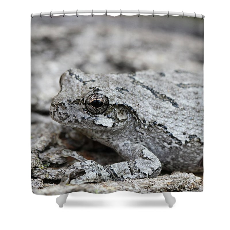 Frog Shower Curtain featuring the photograph Cope's Gray Tree Frog #5 by Judy Whitton
