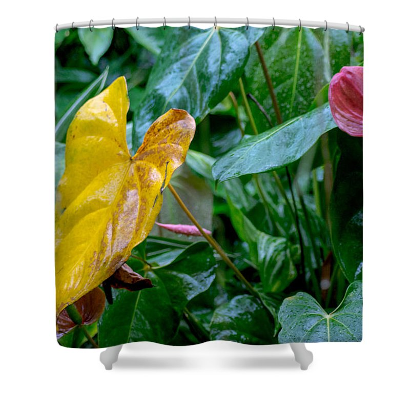 Plant Shower Curtain featuring the photograph Corazon Chino 1 by Totto Ponce