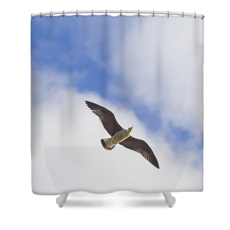 Photo Shower Curtain featuring the photograph Cormorant Drifting At The Sunset by Philippe Taka