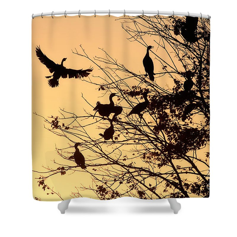Cormorants Shower Curtain featuring the photograph Cormorants At Sunset by Matt Suess