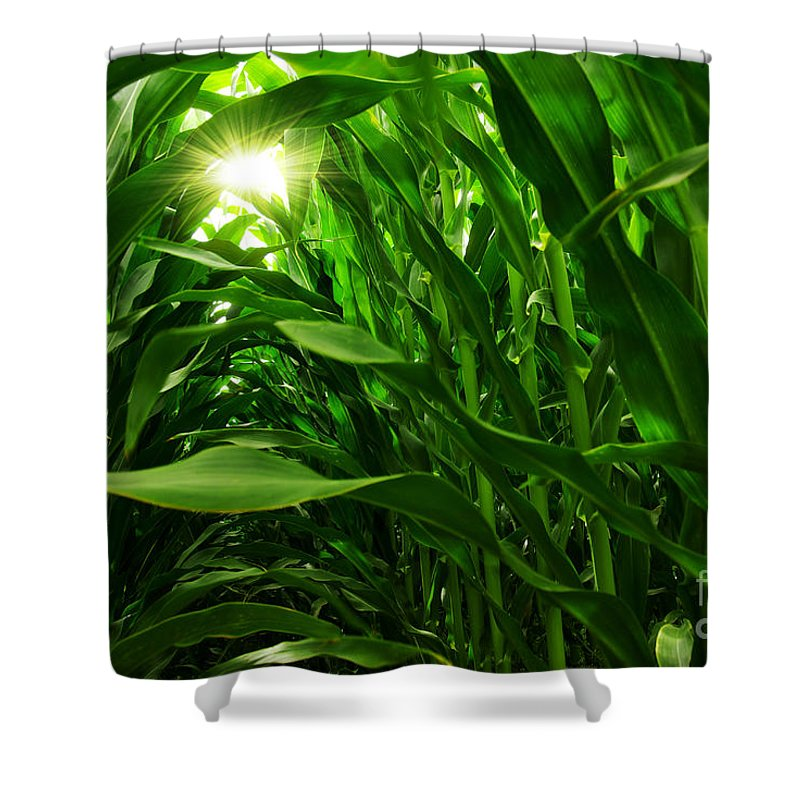Agriculture Shower Curtain featuring the photograph Corn Field by Carlos Caetano