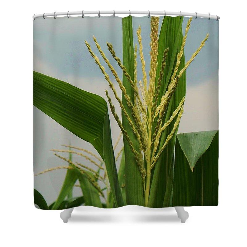 Corn Stalk Shower Curtain featuring the photograph Corn Stalk by Eric Schiabor