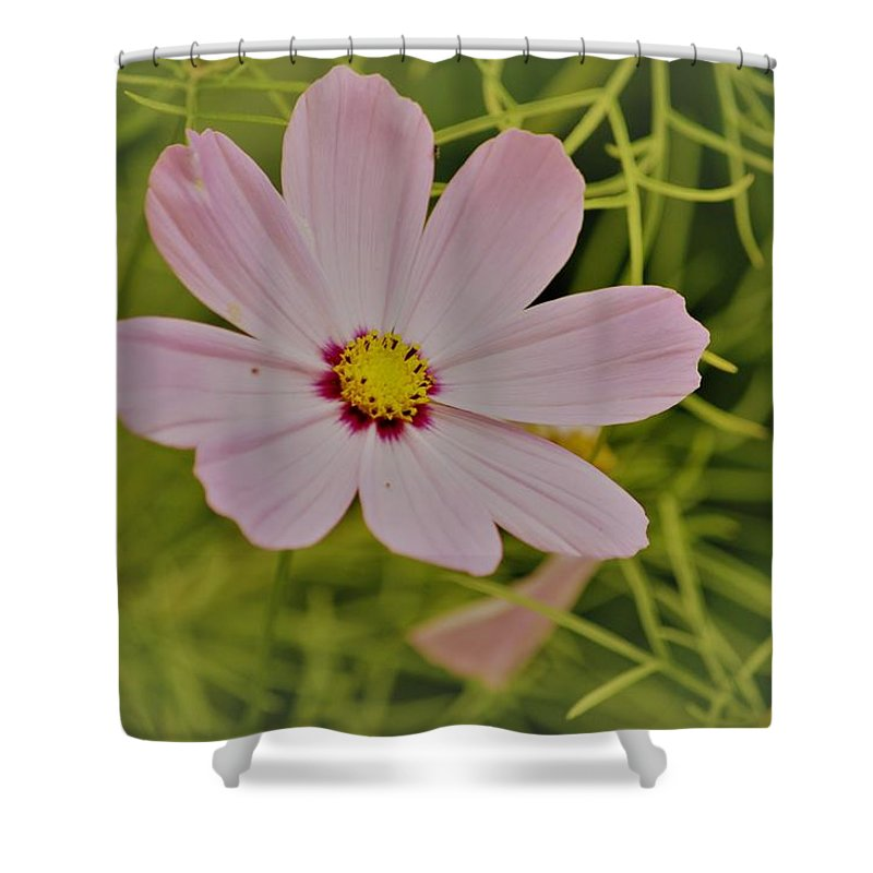 Art For Sale Shower Curtain featuring the photograph Cosmic Aura by Sonali Gangane