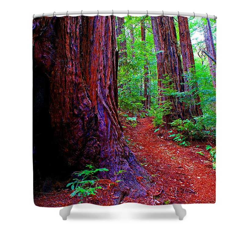 Trail Shower Curtain featuring the photograph Cosmic Redwood Trail On Mt Tamalpais by Ben Upham III