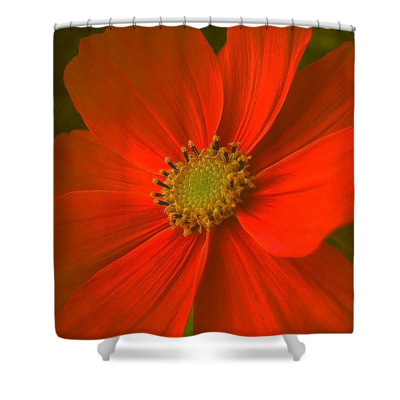 Flower Shower Curtain featuring the photograph Cosmos by Juergen Weiss
