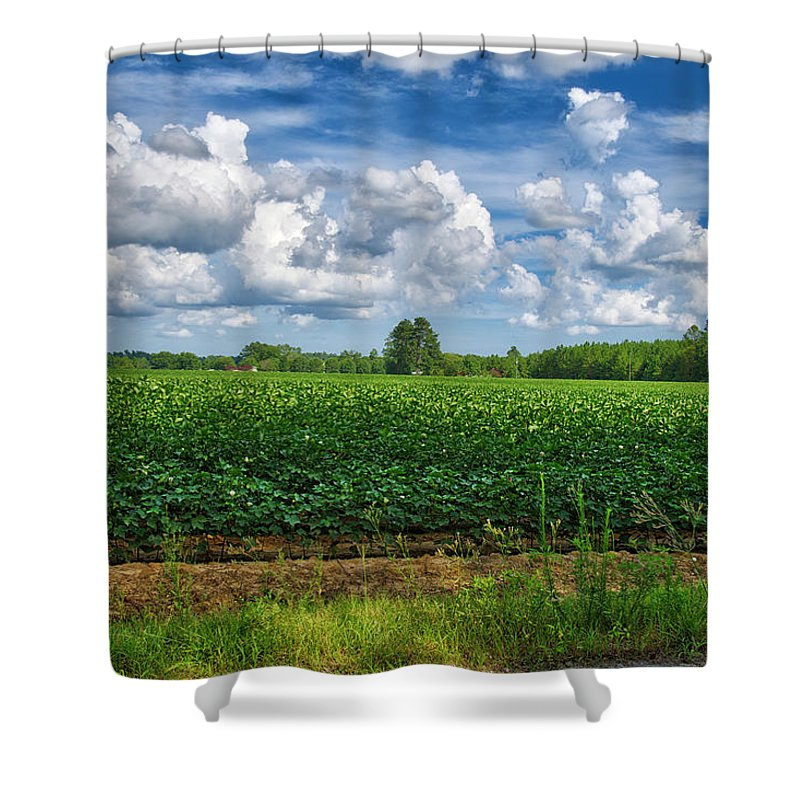 Cotton Shower Curtain featuring the photograph Cotton Fields Of Sc by TJ Baccari