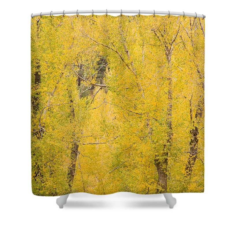 Yellow Shower Curtain featuring the photograph Cottonwood Autumn Colors by James BO Insogna