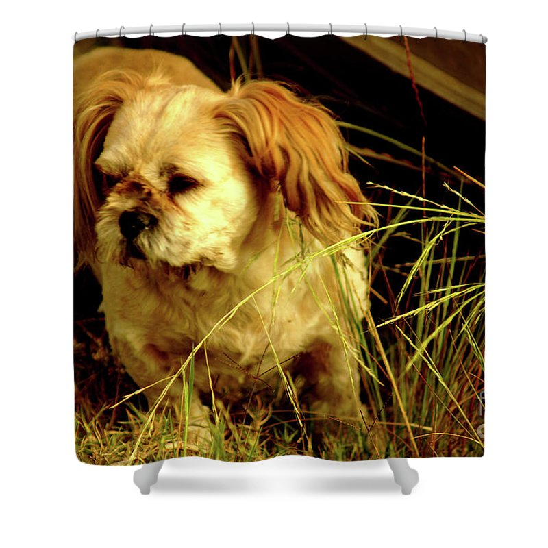 Shih Tsu Shower Curtain featuring the photograph Country Life by Cassandra Buckley