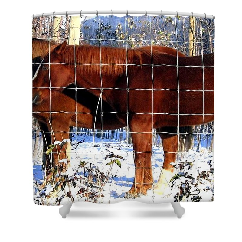 Horses Shower Curtain featuring the photograph Country Pals by Will Borden