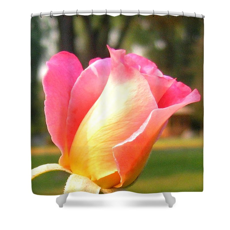 Rose Shower Curtain featuring the photograph Country Rose by Will Borden