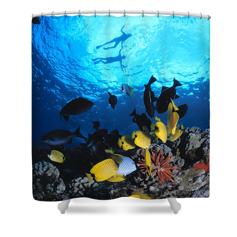 Animal Art Shower Curtain featuring the photograph Couple Snorkels At Surfac by Ed Robinson - Printscapes