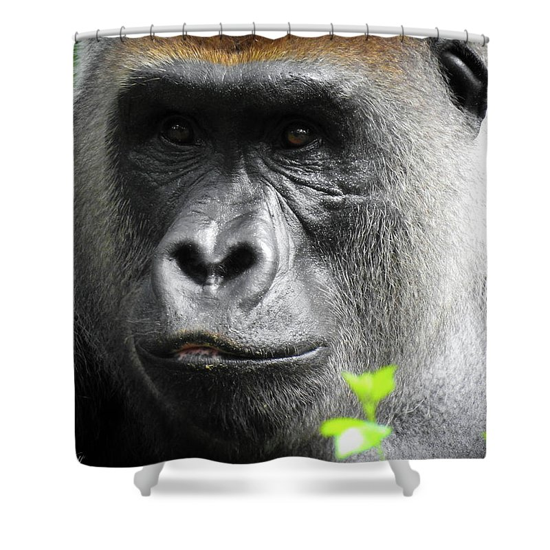 Gorilla Shower Curtain featuring the photograph Cousin Number 12 by Elie Wolf