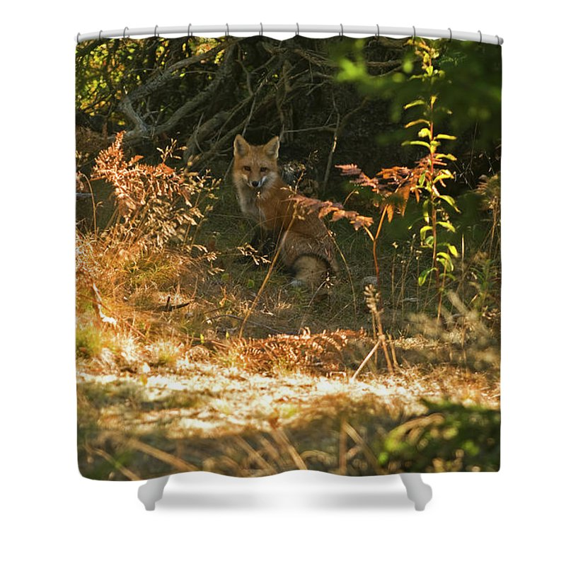 red Fox Shower Curtain featuring the photograph Cover Shot by Paul Mangold