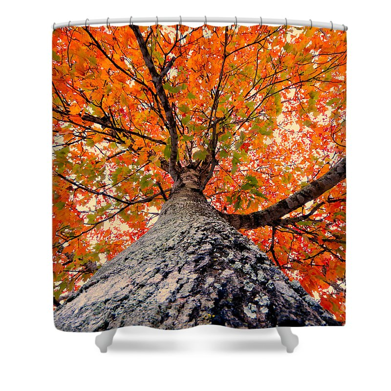 Fall Shower Curtain featuring the photograph Covered In Fall by David Lee Thompson