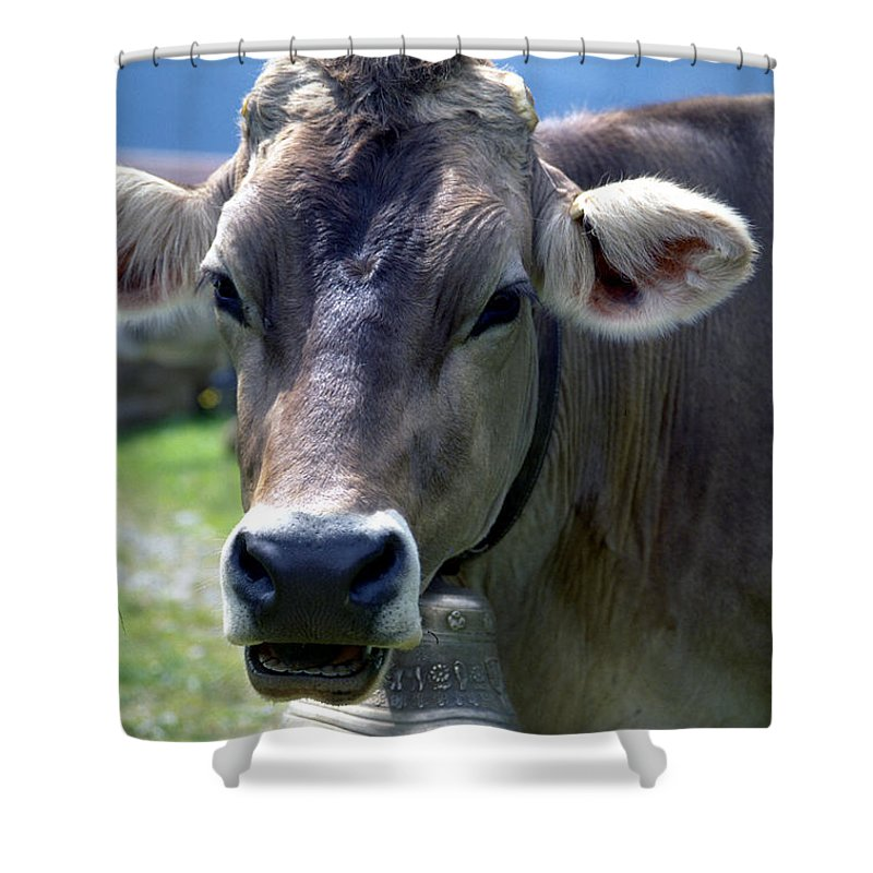 Cow Shower Curtain featuring the photograph Cow by Flavia Westerwelle