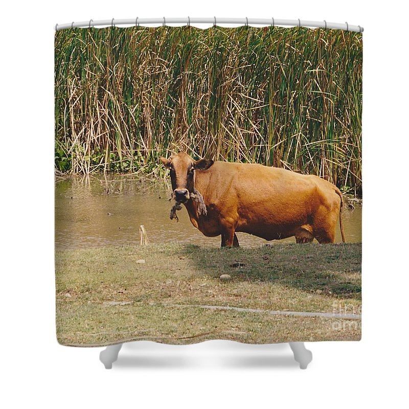 Animal Shower Curtain featuring the photograph Cow In The Field by Michelle Powell