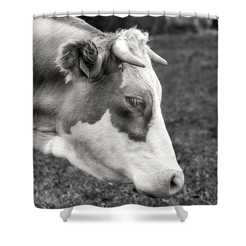 Cow Shower Curtain featuring the photograph Cow Portrait by Martin Capek