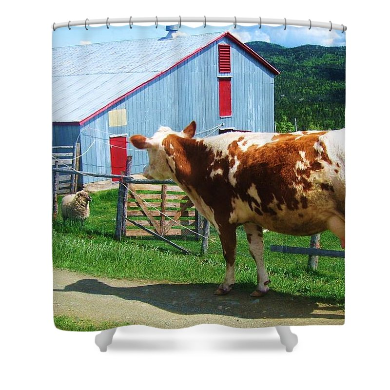 Photograph Cow Sheep Barn Field Newfoundland Shower Curtain featuring the photograph Cow Sheep And Bicycle by Seon-Jeong Kim
