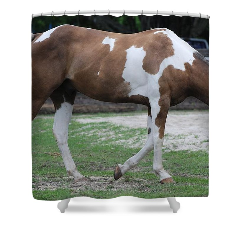 Horse Shower Curtain featuring the photograph Cow Spotted Horse by Rob Hans