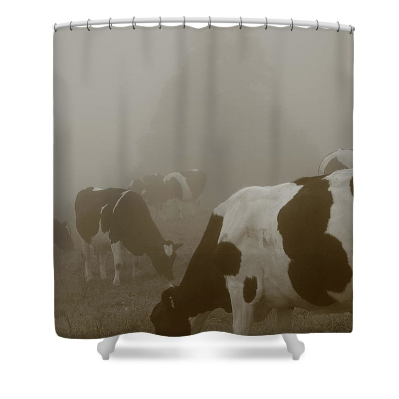 Animals Shower Curtain featuring the photograph Cows In The Mist by Gaspar Avila