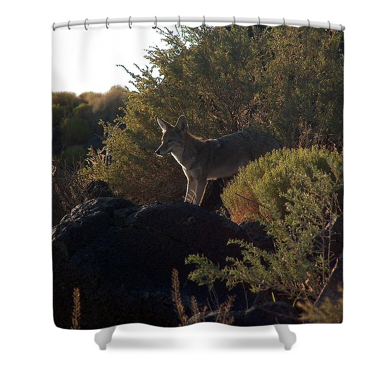 Coyote Shower Curtain featuring the photograph Coyote At The Petrogyphs 2 by Tim McCarthy