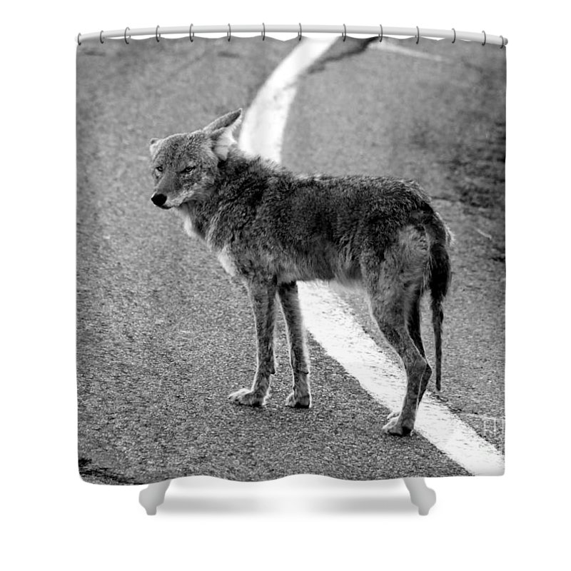 Coyote Shower Curtain featuring the photograph Coyote On The Road by David Lee Thompson