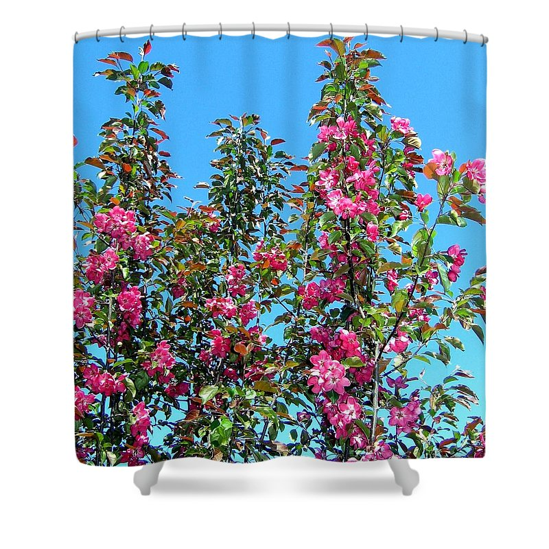 Crab Apple Blossoms Shower Curtain featuring the photograph Crab Apple Blossoms by Will Borden