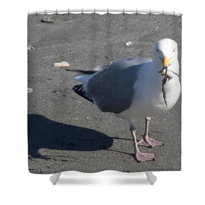 Seagull Shower Curtain featuring the photograph Crab Plate by Steven Natanson