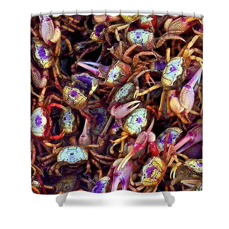 Animals Shower Curtain featuring the photograph Crabby by Dale Chapel