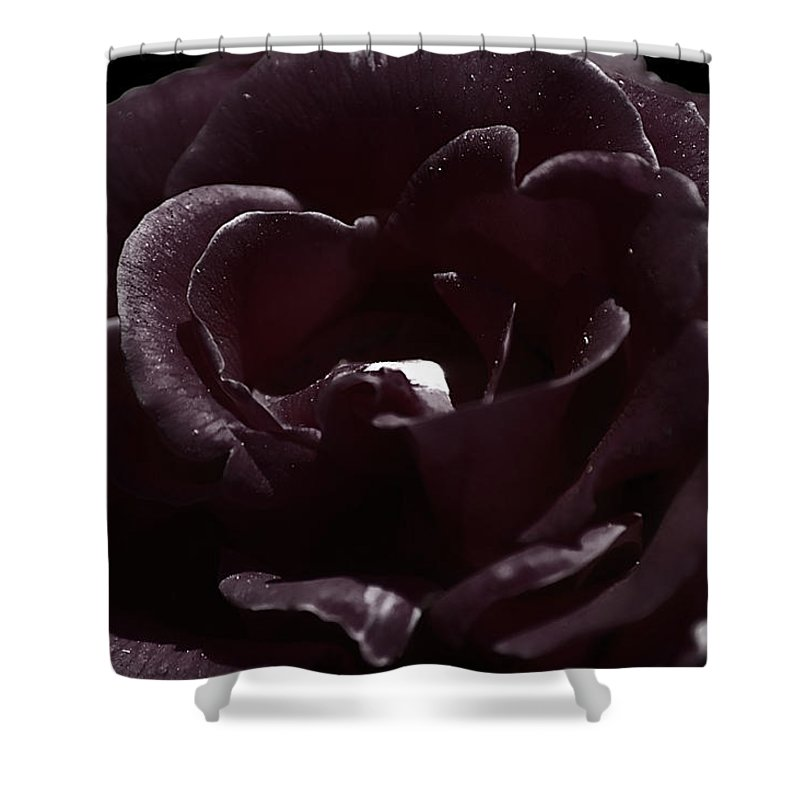 Clay Shower Curtain featuring the photograph Cranberry Rose by Clayton Bruster