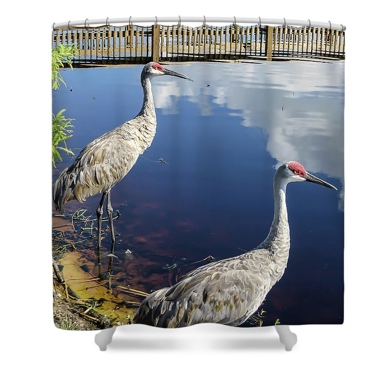 Birds Shower Curtain featuring the photograph Cranes At The Lake by Zina Stromberg