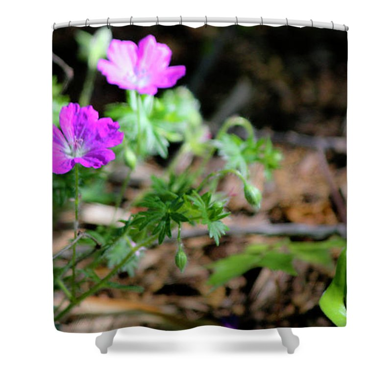 Cranesbill Shower Curtain featuring the photograph Cranesbill by Teresa Mucha