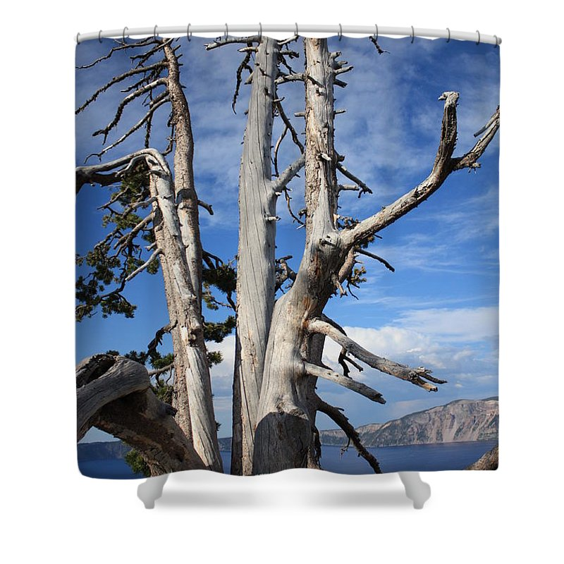 Tree Shower Curtain featuring the photograph Crater Lake Tree by Carol Groenen