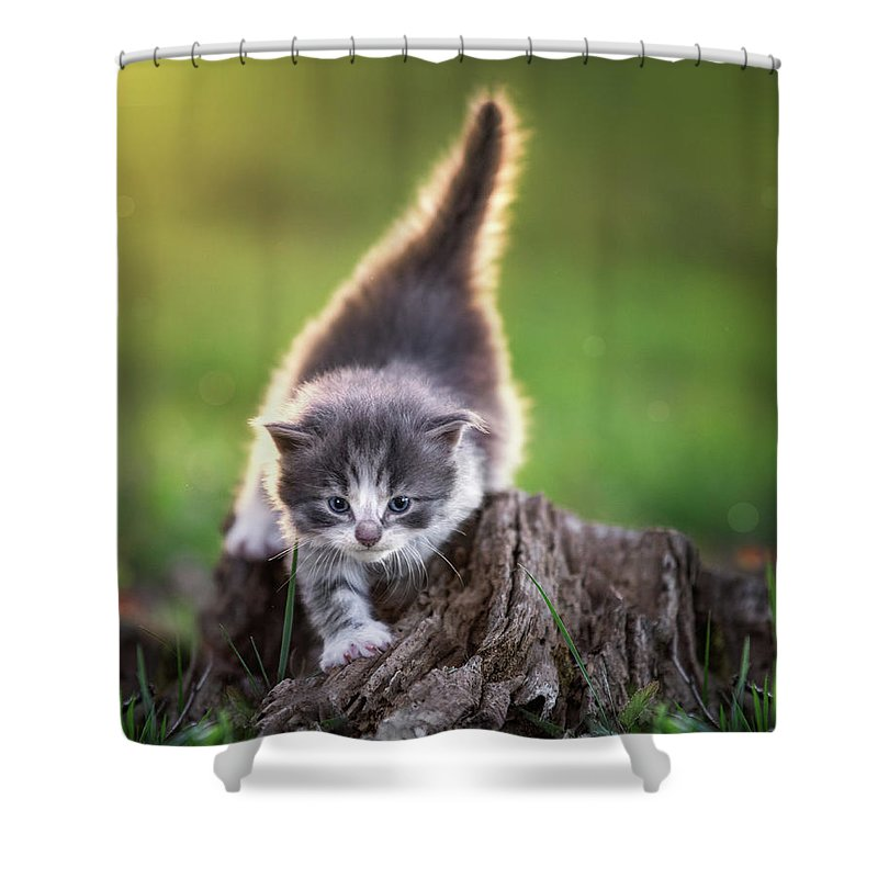 Cat Shower Curtain Featuring The Photograph Crawling Kitten By Jonathan Ross